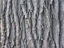 Vecchia corteccia di albero Immagini Stock Libere da Diritti