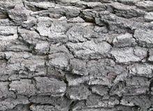 Vecchia corteccia di albero della betulla fotografie stock