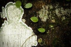 Vecchia corteccia di albero di legno Immagini Stock