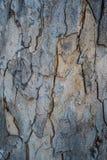 Vecchia corteccia di legno Fotografie Stock Libere da Diritti