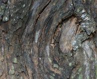 Vecchia corteccia di legno Fotografia Stock Libera da Diritti