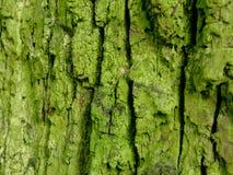 Vecchia corteccia verde fotografie stock