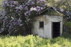 Vecchia costruzione abbandonata circondata dai fiori vicino alla regione di Palouse di Washington State America Fotografie Stock
