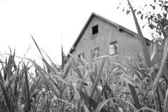 Vecchia costruzione nella foresta bavarese Fotografie Stock Libere da Diritti