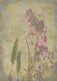 Vecchia e priorità bassa consumata di struttura del documento del fiore Fotografie Stock Libere da Diritti