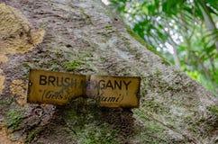Vecchia etichetta di identificazione per un mogano della spazzola incastonato nel tronco di albero fotografia stock libera da diritti