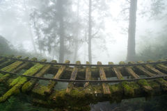 Vecchia ferrovia nella foresta Fotografie Stock