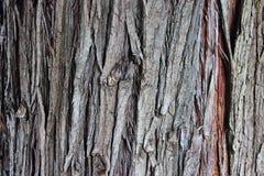 Vecchia corteccia di albero Immagini Stock