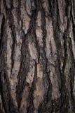 Vecchia fine della corteccia di albero su Fotografie Stock