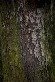 Vecchia fine della corteccia di albero su Fotografie Stock Libere da Diritti