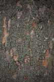 Vecchia fine della corteccia di albero su Immagine Stock Libera da Diritti