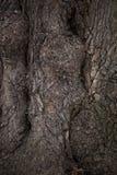 Vecchia fine della corteccia di albero sul fondo di struttura Fotografia Stock