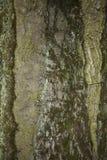 Vecchia fine della corteccia di albero sul fondo di struttura Immagini Stock