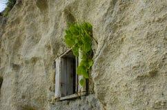 Vecchia finestra di legno con le piante e la parete strutturata ondulata 2 Fotografia Stock