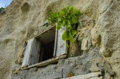 Vecchia finestra di legno con le piante e la parete strutturata ondulata 1 Immagine Stock