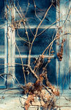 Vecchia finestra variopinta Fotografia Stock Libera da Diritti