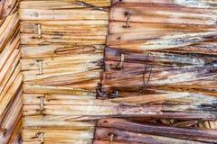 Vecchia foglia arrugginita della noce di cocco Fotografia Stock Libera da Diritti