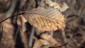 Vecchia foglia dell'albero in primavera Immagini Stock