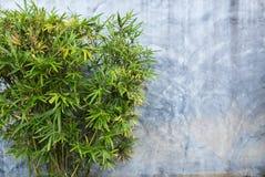 Vecchia foglia di bambù del crepa del muro di cemento e Immagini Stock