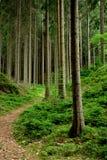 Vecchia foresta Fotografie Stock