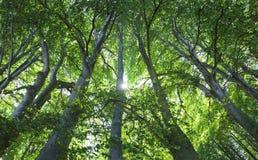 Vecchia foresta fotografia stock libera da diritti