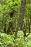 Vecchia foresta decidua fotografie stock