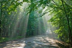 Vecchia foresta decidua con i fasci luminosi entrare Fotografie Stock