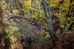 Vecchia foresta di autunno fotografie stock