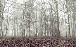 Vecchia foresta durante il giorno di autunno Immagini Stock Libere da Diritti