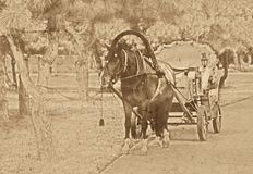 Vecchia foto dell'annata del cavallo Fotografia Stock Libera da Diritti