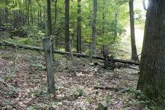 Vecchia linea di recinzione nella foresta immagine stock libera da diritti