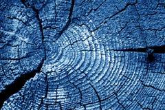 Vecchia macro del taglio del ceppo nel tono dei blu navy fotografia stock libera da diritti