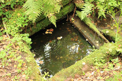 Vecchia molla di morte nella foresta Fotografie Stock