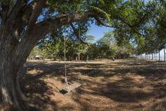 Vecchia oscillazione che appende sul grande albero di tamarindo fotografie stock libere da diritti