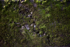 Vecchia parete Immagine Stock