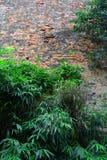 Vecchia parete con bambù Fotografia Stock Libera da Diritti