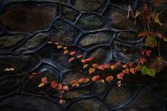 Vecchia parete con i fogli di autunno Immagini Stock
