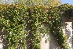 Vecchia parete con le viti Fotografia Stock Libera da Diritti