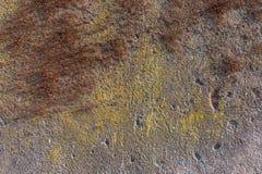 Vecchia parete coperta di muschio Immagini Stock Libere da Diritti