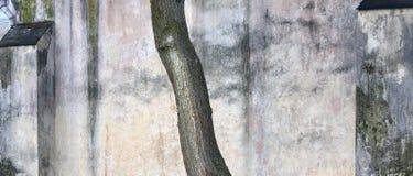 Vecchia parete della via Fotografia Stock Libera da Diritti