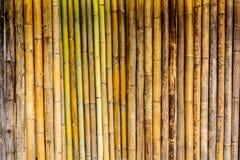 Vecchia parete di bambù Fotografia Stock Libera da Diritti