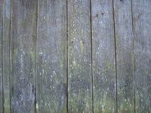 Vecchia parete di legno del pino coperta di muschio immagine stock