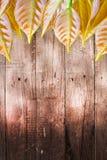Vecchia parete di legno scura con il fondo dell'albero delle foglie fotografia stock libera da diritti