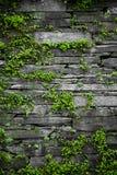 Vecchia parete di pietra con il fondo delle foglie Fotografie Stock Libere da Diritti