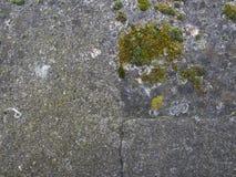 Vecchia parete di pietra con la muffa verde a Parigi Fotografia Stock Libera da Diritti