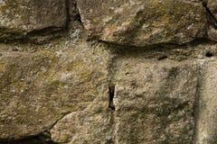 Vecchia parete di pietra coperta di muschio Immagine Stock