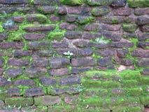 Vecchia parete di pietra in Sri Lanka Fotografie Stock