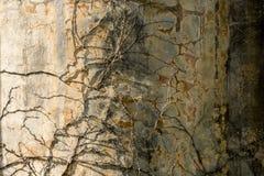 Vecchia parete di pietra strutturata con i rami asciutti su  Fondo di lerciume immagini stock libere da diritti