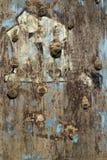 Vecchia parete rampicante Fotografia Stock Libera da Diritti