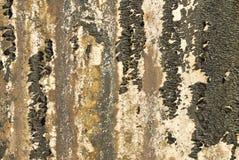 Vecchia parete strutturata con la muffa Immagini Stock Libere da Diritti